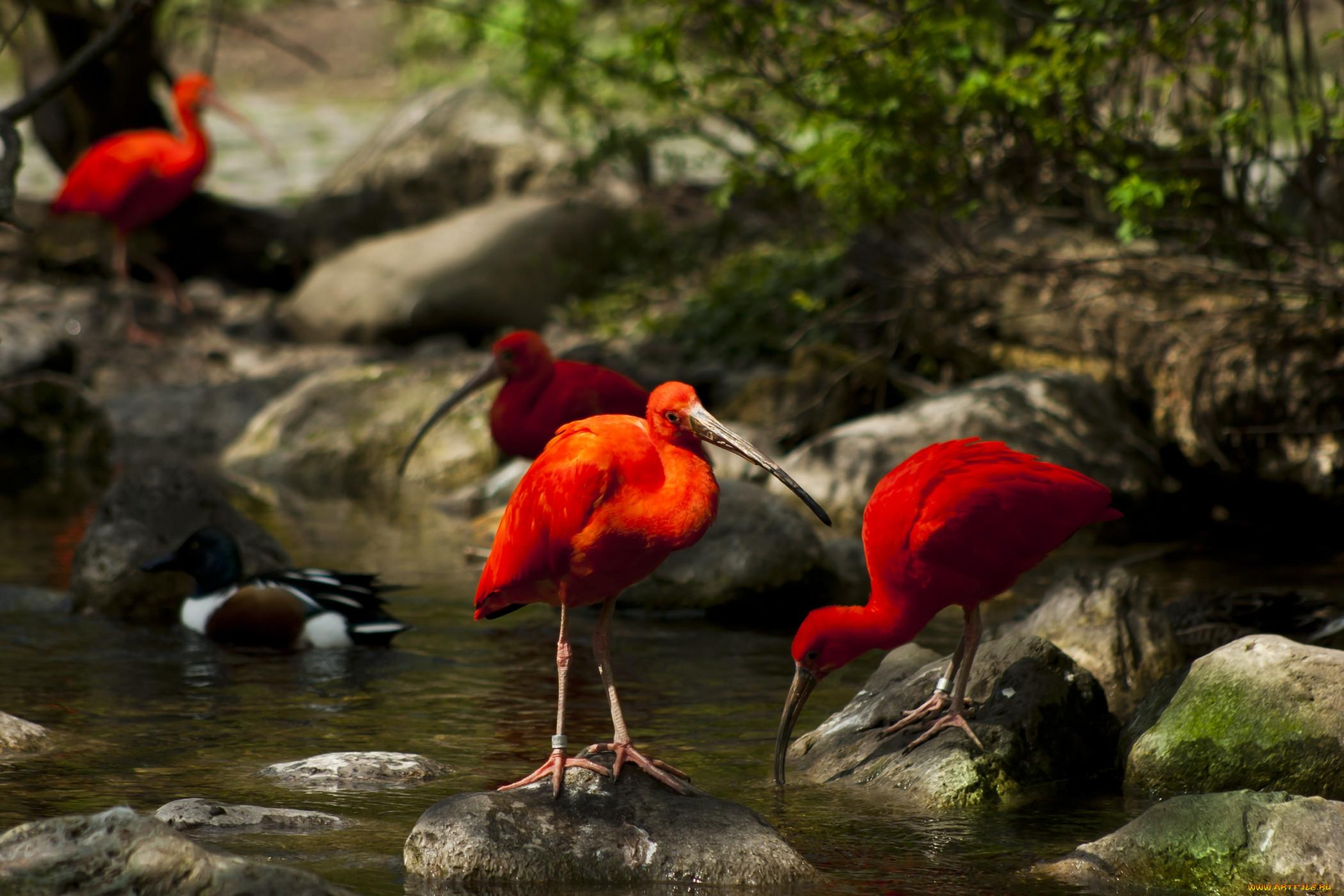 Картинки птицы в природе